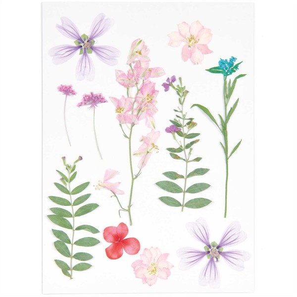 Gepresste Blüten Mix Set rosa violett
