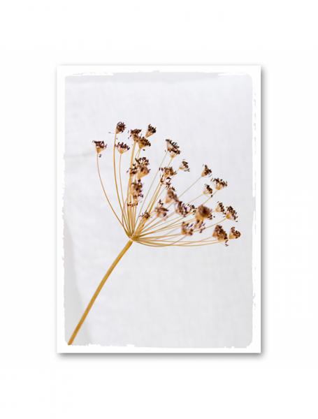 Canvas Trockenblume Bärenklaue von MoCa