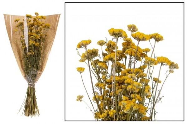 Trockenblumen Lona