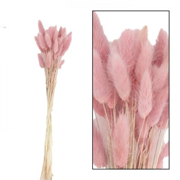 Lagurus bundle